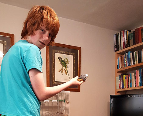boy taming a budgie