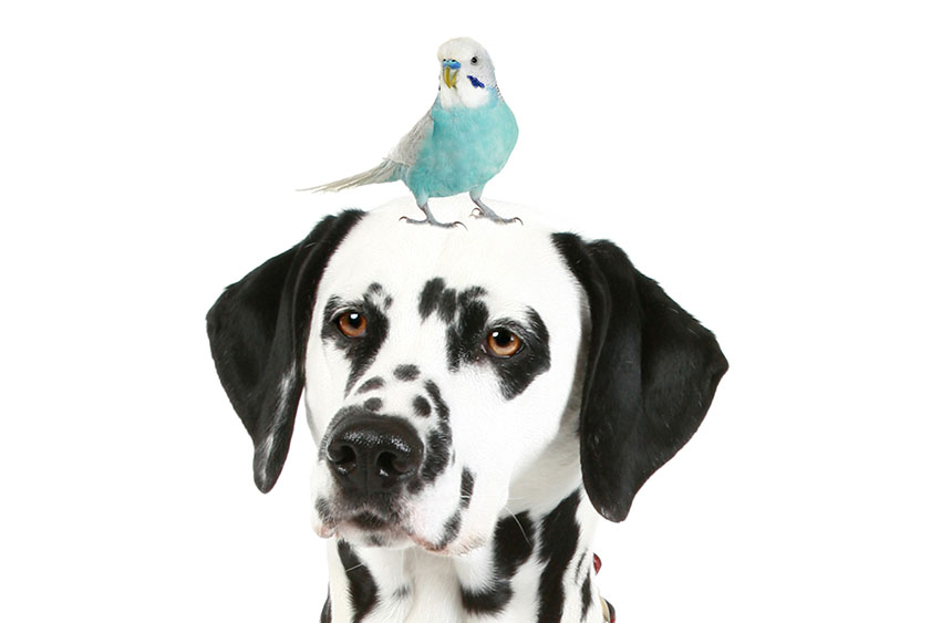 budgie_and_dogs