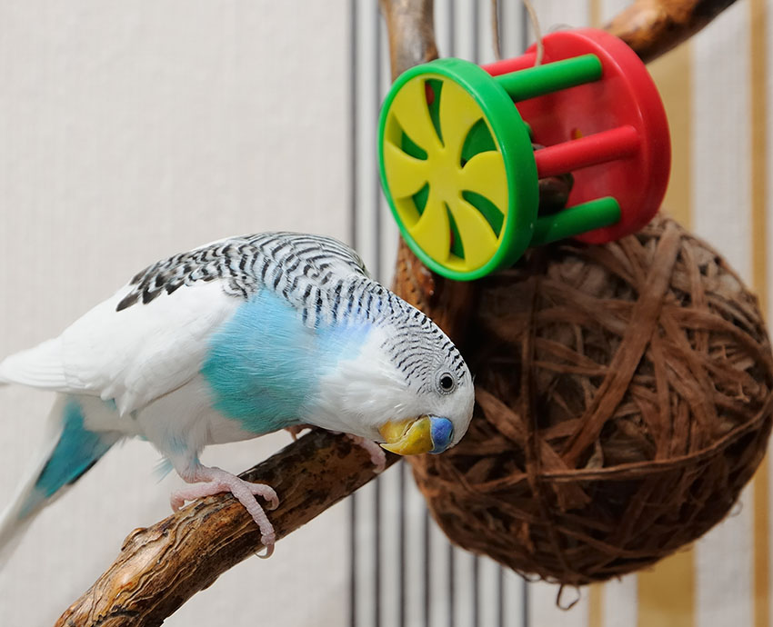 budgie_toys_for_cage