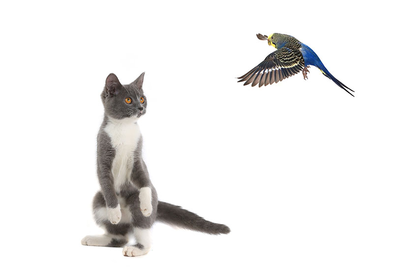 budgies and cats