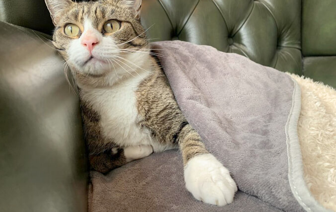 Spoil your cat with a Luxury Super Soft Blanket they will love to cosy up with!