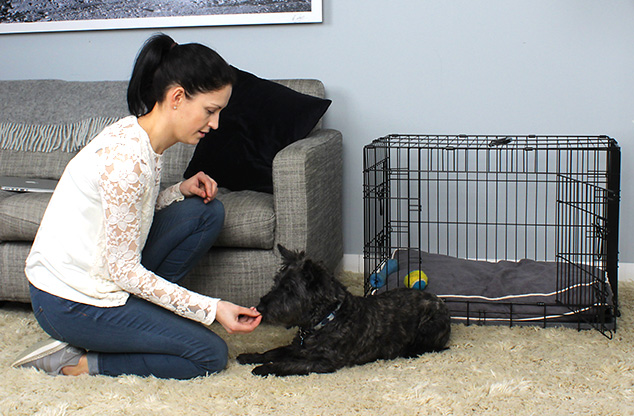 chiot-education-canine-dog-crate