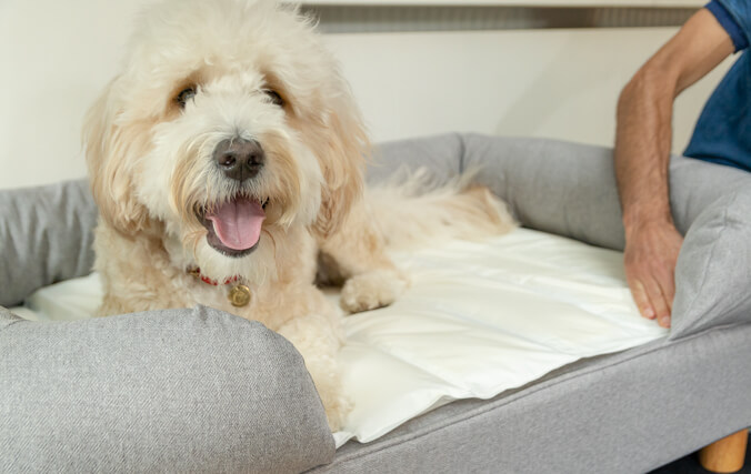 You can put the Cooling Mat on your dog's bed for added comfort, however the memory foam makes sure it's comfortable on all surfaces.