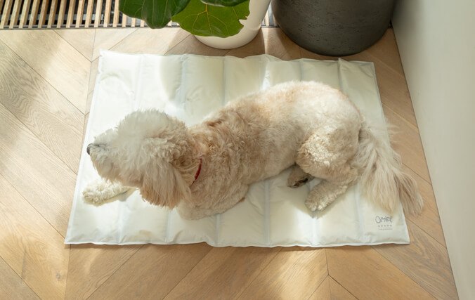 Dogs of all ages will love chilling on the rip-resistant mat.