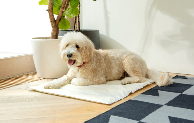 Prevent sunstroke and overheating with Omlet's Cooling Mats, a practical and portable saviour for all dogs on hot summer days.