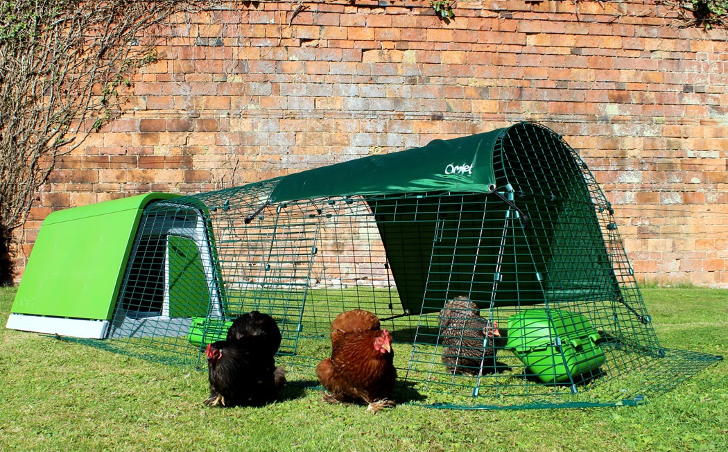 The chicken run has a movable door, so you can let your chickens roam free in the backyard.