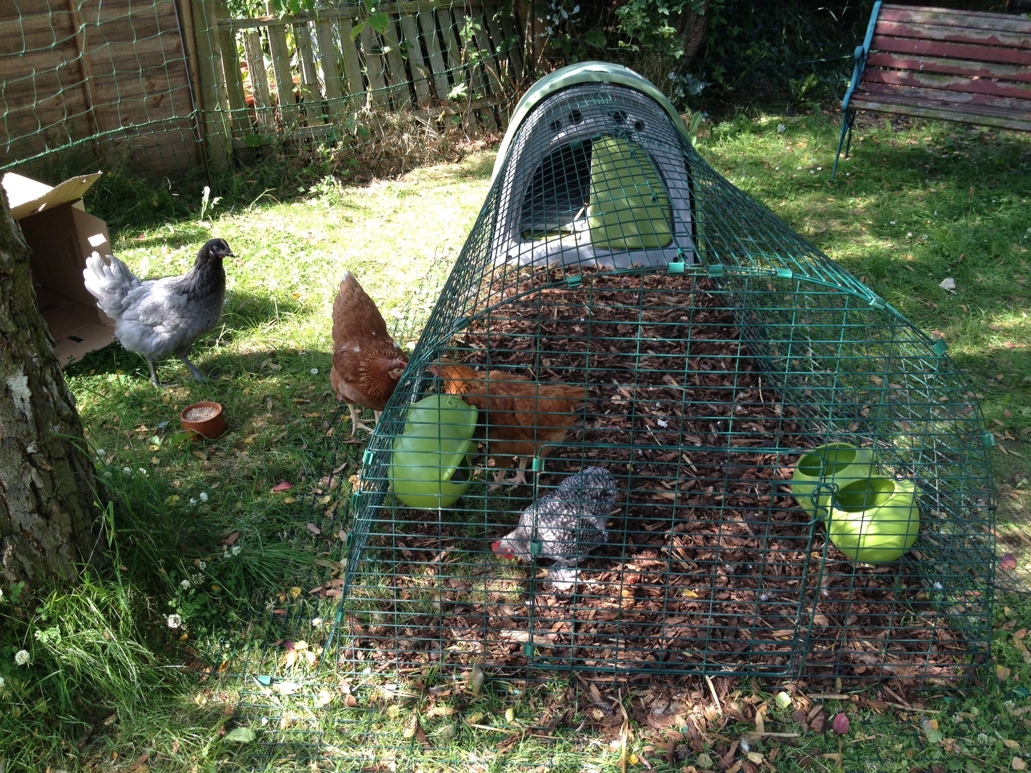 Emilia Taylor's hens love searching for worms inside their Eglu Run