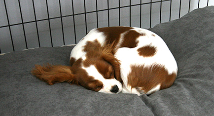 A soft comfy dog bed in a Omlet Fido