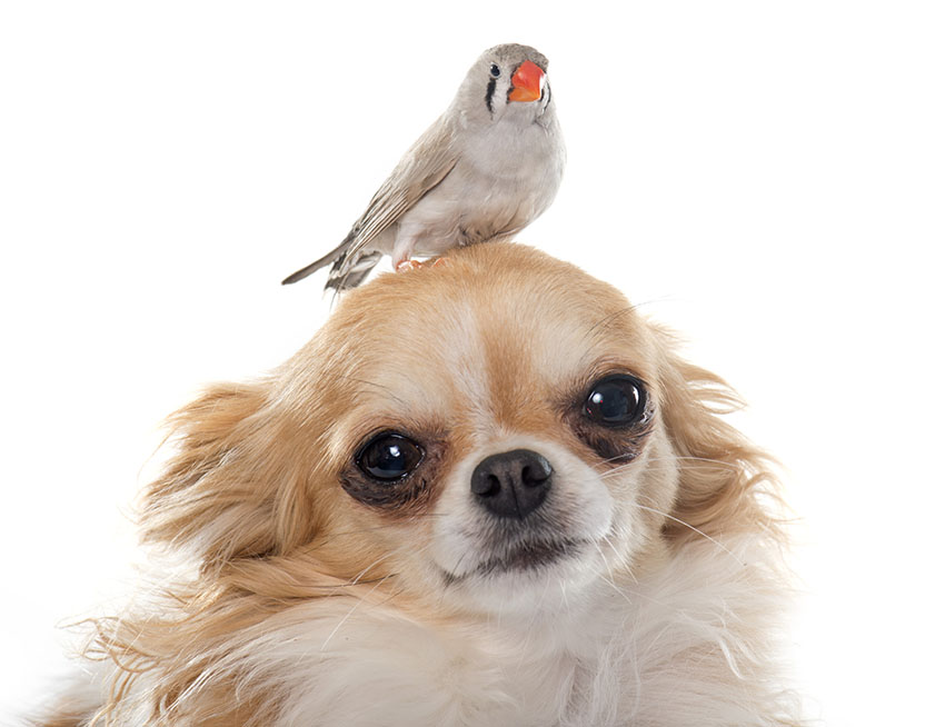 Finches and dogs