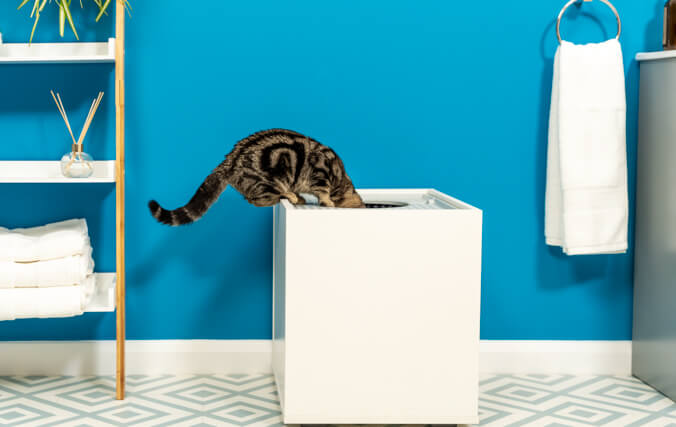 """A tabby cat looking into a white little box"""" data-image-id="""