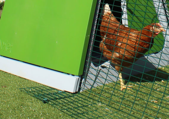 The predator resistant skirting of an Eglu Go chicken run.