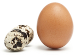 Quails Eggs Compared To Chickens