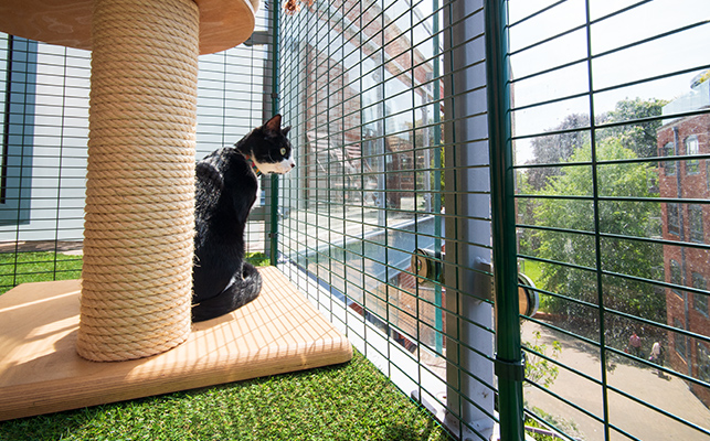 A cat sitting near a scratching post in the cat balcony enclosure