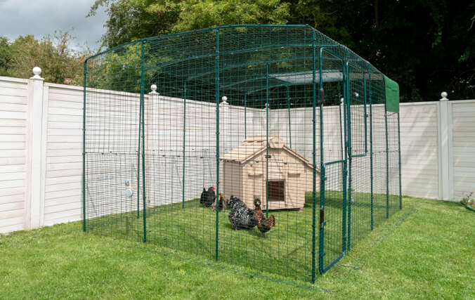 Large Chicken Coop for Up to 12 Chickens