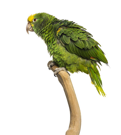 New parrots need a carrying box or cage