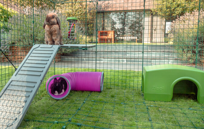 Rabbits Will Feel Secure Up High, and Safe Sheltered Below